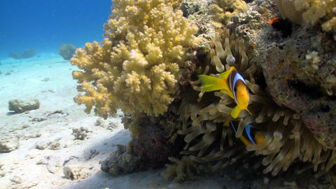 coral reef fish Footage