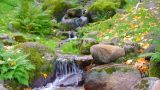 Autumn Landscape With Wellspring. stock footage