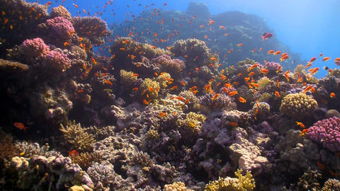 coral reef red fish Stock Video Footage