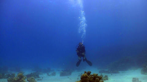 diver swims coral reefs Stock Video Footage