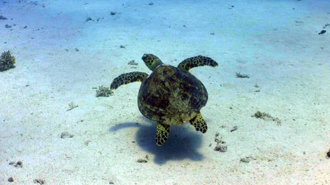 Turtle swimming in coral reef Footage