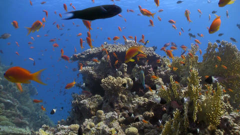 colorful fish on coral reef Stock Video Footage