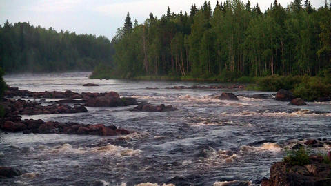 rough river flows through the forest Stock Video Footage
