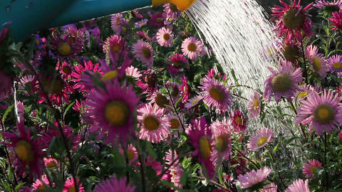 Flowers in the spray Stock Video Footage