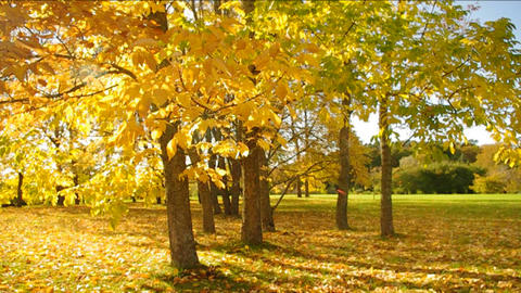 Nice park in autumn Stock Video Footage