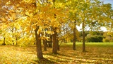 Nice Park In Autumn stock footage