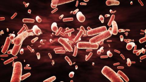 Microscopic Ecoli Bacteria Stock Video Footage