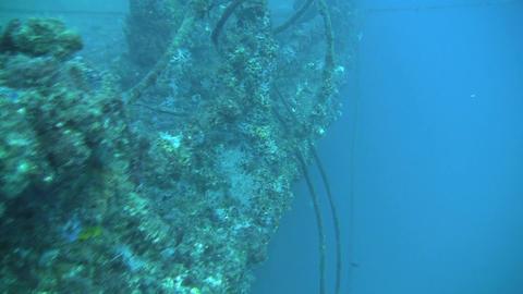 HMAS Brisbane Wreck Stock Video Footage