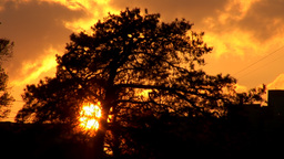 sunset tree Stock Video Footage