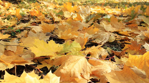 Yellow Autumn Leafs stock footage
