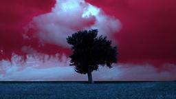 4K Landscape Timelapse Lonely Tree Prairie stock footage