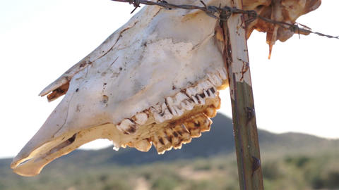 Cow Skull on Fence with Sunlight Rays Footage