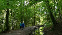 Couple Walking In Skipton Castle Woods stock footage