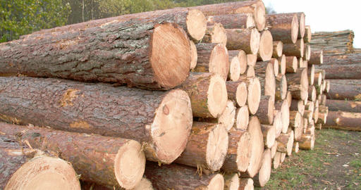 Heaps of logs from the cut spruce trees FS700 4K Footage