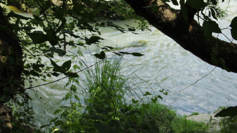 Look Through The Branches On River Ibar 0010 stock footage