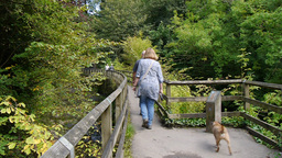 Older Couple And Dog Walk Over Wooden Bridge stock footage