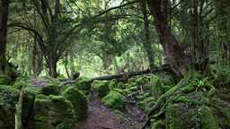 4k puzzlewood forest of dean Footage