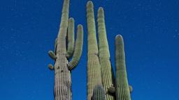 Cactus 1 2011 stock footage