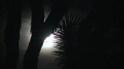 Joshua Tree Moon 2 2012 Footage