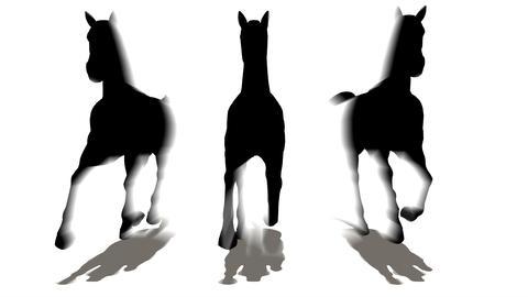 three horses Animation