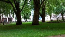 Old English Oak Trees Footage