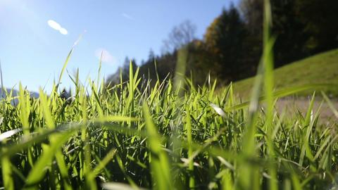 Camera moving through green grass in the Alps moun Footage