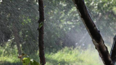 Watering in dry summer Footage