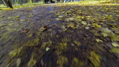 Yellow Leaves On The Road stock footage