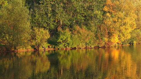 Autumn Forest. Lake. Autumn Landscape stock footage