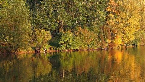 Autumn forest. Lake. Autumn Landscape Footage