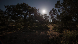 Moonrise with moving shadow of trees Footage