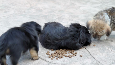Three Puppies Eating From The Bowl stock footage