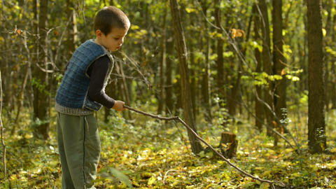 Little boy playing in the woods Footage