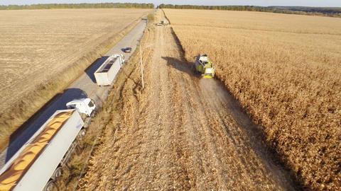 Harvesters Work on Cornfield Footage