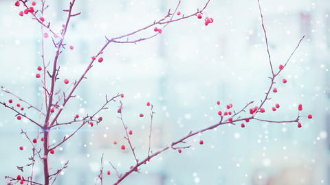 branches of red berry and snowfall Footage