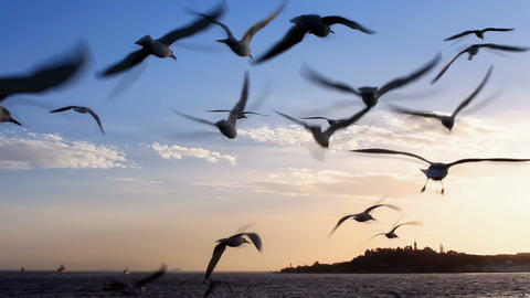 Flock Of Birds stock footage