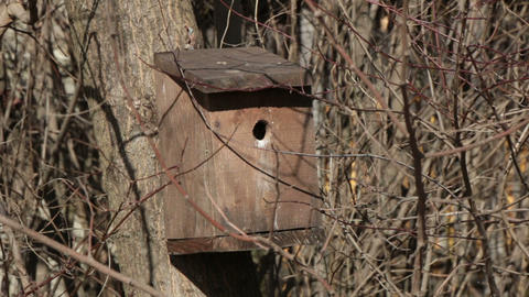 bird house on a tree Footage