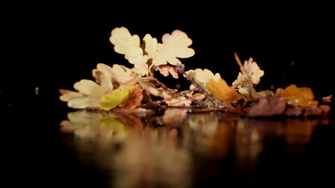 autumn branch of an oak with foliage on dark backg Footage