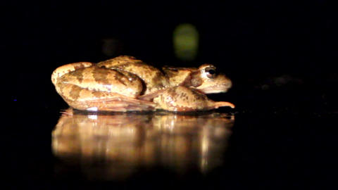 Big Frog On Dark Background stock footage