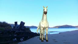 White horse Animation