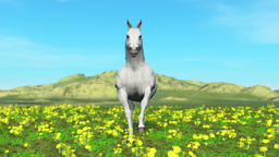 White horse Stock Video Footage