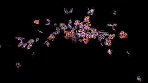 Butterfly fly,Design,pattern,symbol,dream,vision,idea,creativity,vj,art,decorative,mind,Petal,stamen Animation
