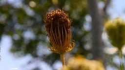 Wild Flowers 05 Stock Video Footage