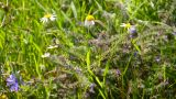 Wild Flowers 01 stock footage