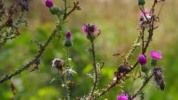 Wild Flowers 03 Footage