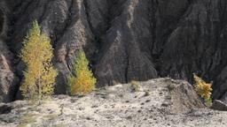 autumn birch trees on sand hills Stock Video Footage