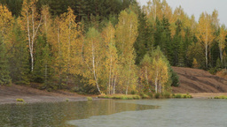 autumn forest in rain Footage