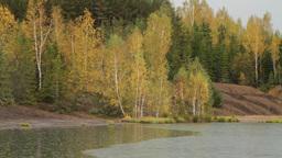autumn forest in rain Stock Video Footage