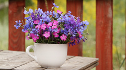 wild flowers in a cup Stock Video Footage