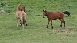 Horses on a green meadow Stock Video Footage
